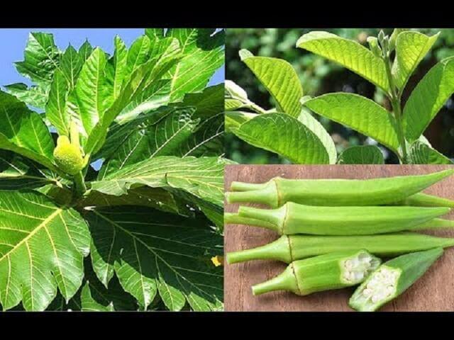 Uống nước đậu bắp kết hợp với các thảo dược khác