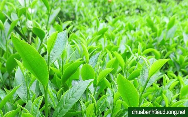 người bị tiểu đường nên uống trà xanh