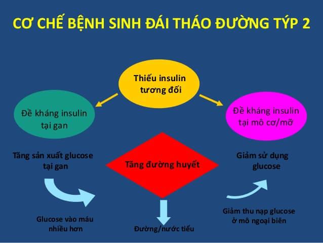 Cơ chế bệnh tiểu đường tuýp 2